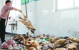 Le pellicce di cane e gatto in cina for Vendita carassi vivi